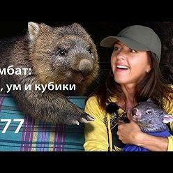 Евгения Тимонова - Вомбат: ум, зад и кубики