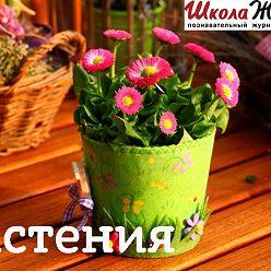 Алексей Норкин - Куркума: лекарство, косметика или прекрасный цветок?