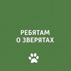 Творческий коллектив программы «Пора домой» - Животные и Олимпиада