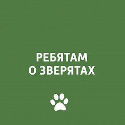 Творческий коллектив программы «Пора домой» - О взаимоотношениях собаки и хозяина