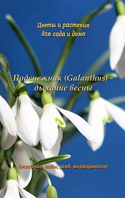 Федор Кольцов - Подснежник (Galanthus) – дыхание весны