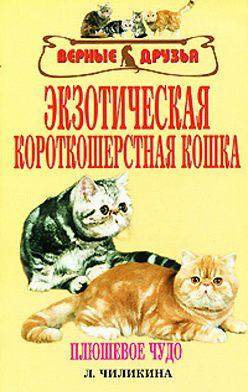 Л. Чиликина - Экзотическая короткошерстная кошка