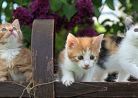 Усатые-полосатые: аудиосказки про котов