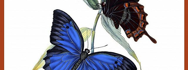 Остров бабочек
