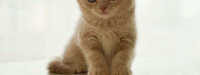История котенка Рыжика