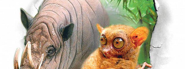 Самые необычные животные