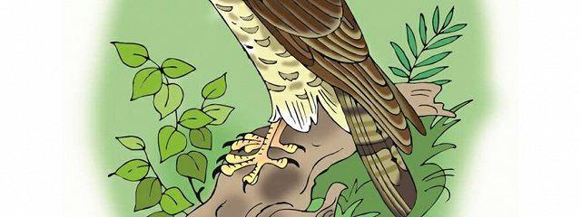 Загадки о хищных птицах