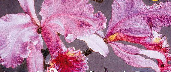 Орхидея съела их всех