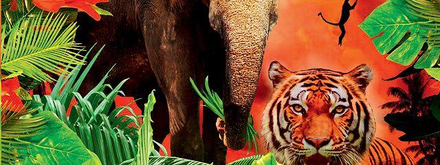 Мальчик из джунглей