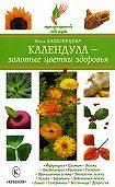 Нина Башкирцева -Календула – золотые цветки здоровья