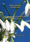 Федор Кольцов -Подснежник (Galanthus) – дыхание весны