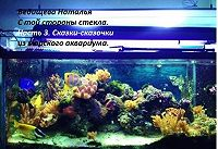Наталья Ведищева -Сказки-сказочки