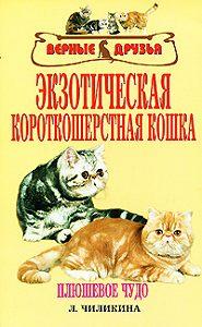 Л. А. Чиликина -Экзотическая короткошерстная кошка