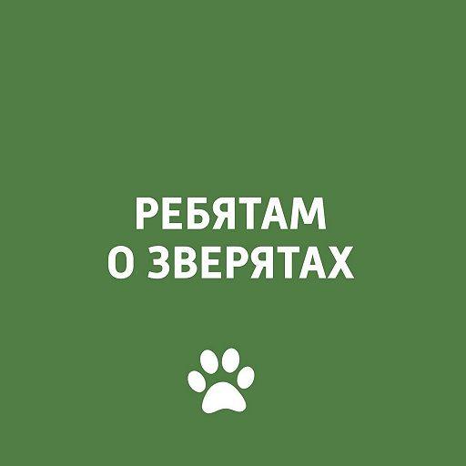 Животные и Олимпиада